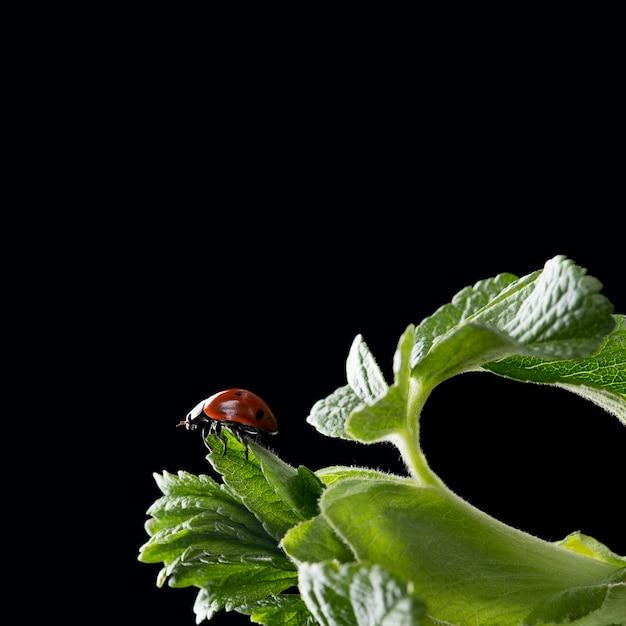 Foto macro de mariquita sentada en hojas verdes frescas Foto Premium