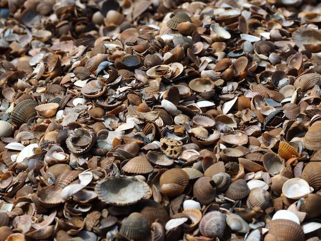 Foto de paisaje de una variedad de almejas de concha Foto gratis