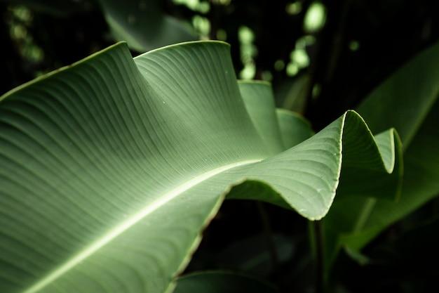 Fotografía macro de hojas tropicales Foto gratis