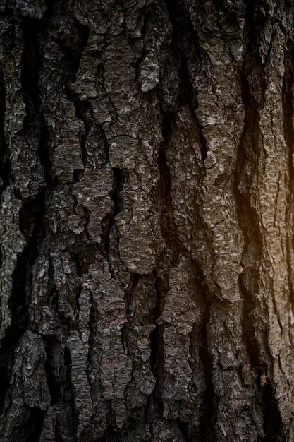 Fotograma completo de corteza de árbol | Descargar Fotos gratis