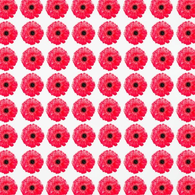 Fotograma completo de delicadas flores rojas | Descargar Fotos gratis