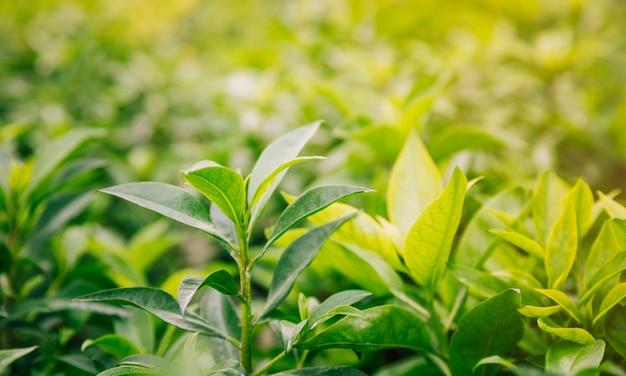 Frescas hojas verdes y amarillas en el jardín. Foto gratis