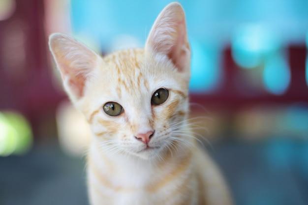 Gatito Gato Rayado Naranja Disfrutar Y Relajarse En La Terraza
