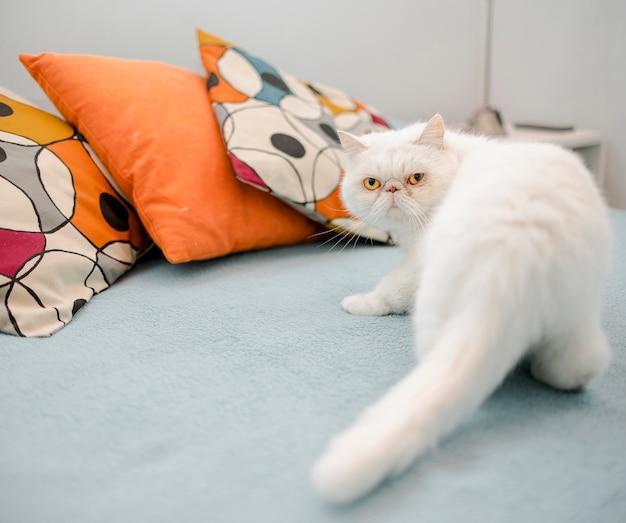 Gatito peludo mirando a cámara Foto gratis