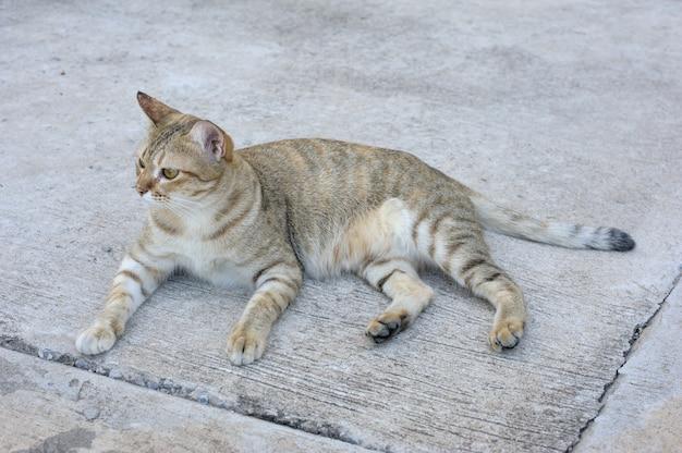 Gatito en el piso Foto Premium
