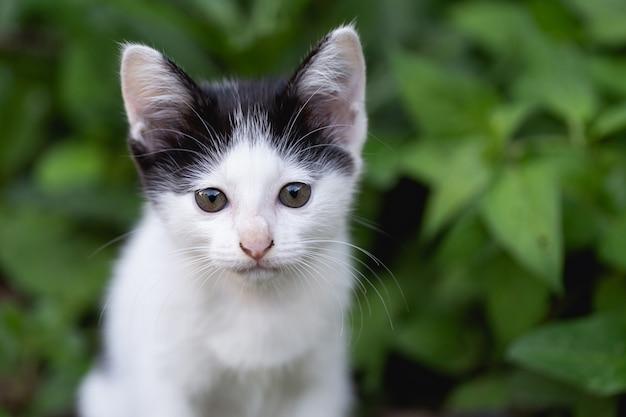 Gatito sentado en el césped. Foto gratis