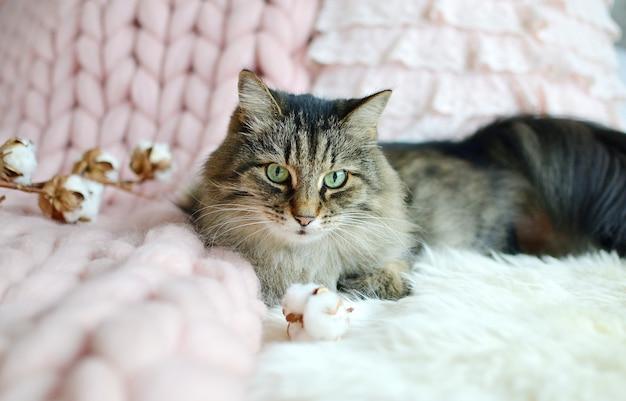 Gato acostado en la cama manta a cuadros gigantes piel dormitorio invierno vibes cosenos relájese Foto Premium