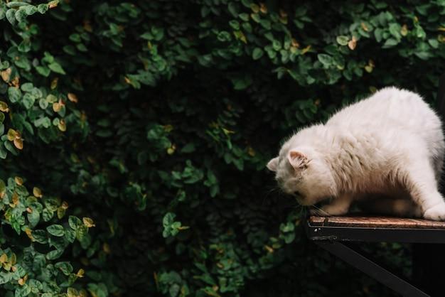 Gato blanco adorable en la naturaleza Foto gratis