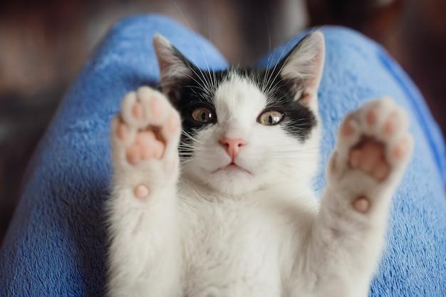 Gato blanco se encuentra en las rodillas de la mujer Foto gratis