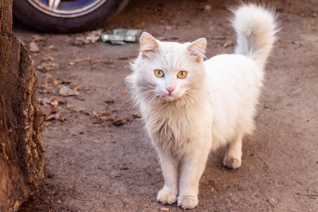 Gato blanco sucio en la calle Foto Premium
