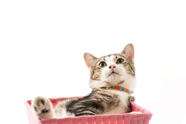 Gato en la canasta Foto gratis