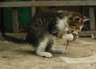 gato comiendo un ratón Foto Gratis