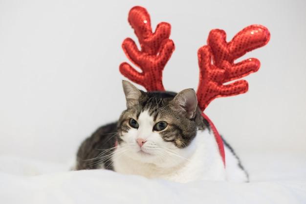 Gato divertido del reno de rudolph de la navidad, mintiendo en una ...