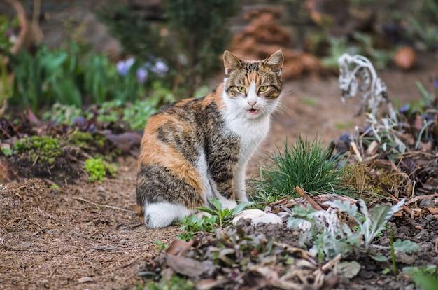 Gato doméstico adulto sentado en la hierba Foto Premium