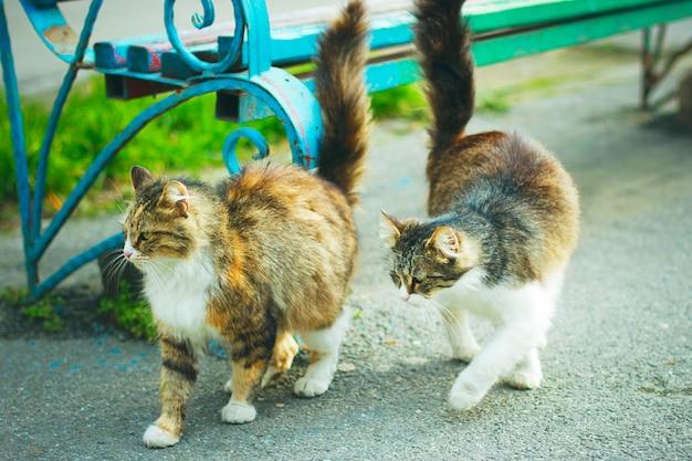 Un gato doméstico lindo gris marrón esponjoso blanco en el exterior o parque Foto gratis