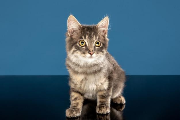 Gato joven, sentado Foto gratis