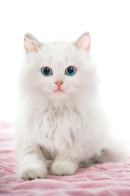 Gato joven Foto Premium