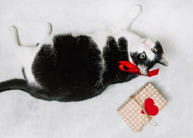 Gato con lazo cerca de caja actual y adorno de corazón. Foto gratis