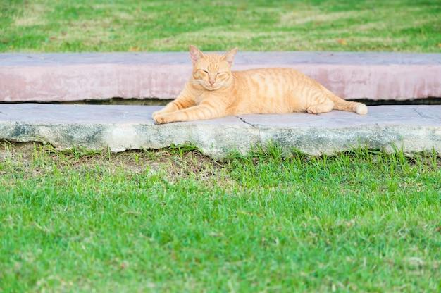 Gato marrón en el jardín Foto Premium