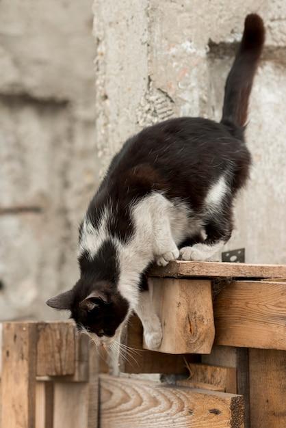 Gato negro y blanco paseando en una granja Foto gratis
