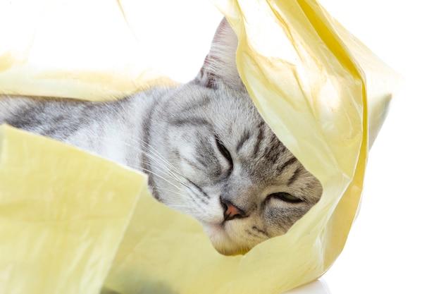 Gato scottish fold duerme en la bolsa de plástico con pelota solo Foto Premium