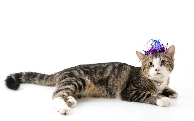 Gato con sombrero de fiesta Foto gratis