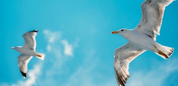 Gaviotas volando en el aire Foto Premium