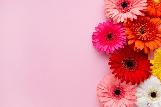 Gerbera daisy flores con fondo rosa espacio de copia Foto gratis
