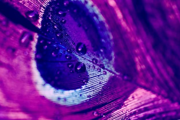 Gotas de agua sobre los vibrantes fondos de plumas azules y rosas Foto gratis