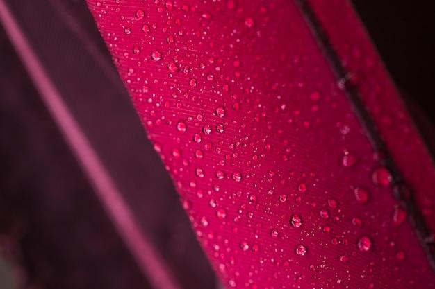 Gotas de agua en la superficie de la pluma rosa Foto gratis