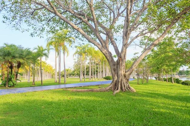 Gran árbol en escena de hermoso parque en el parque con el campo de hierba verde Foto Premium