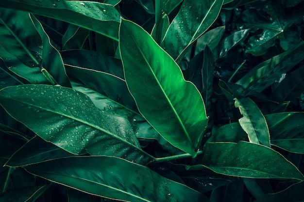 Gran follaje de hoja tropical en verde oscuro con textura de gota de agua de lluvia, fondo de naturaleza abstracta Foto Premium