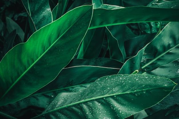 Gran follaje de hoja tropical en verde oscuro con textura de gota de agua de lluvia Foto Premium