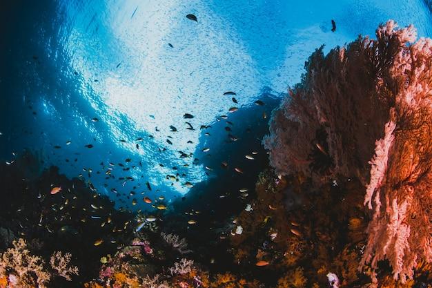 Gran paisaje marino con luz solar Foto gratis