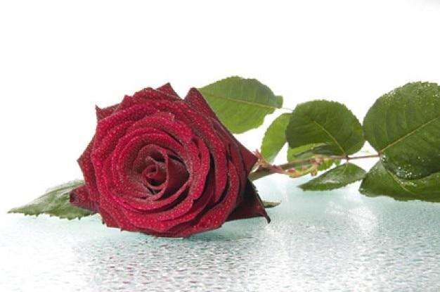 grandes rosas rojas de material de imagen Foto Gratis