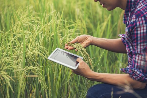 Granjero de pie en un campo de arroz con una tableta. Foto gratis