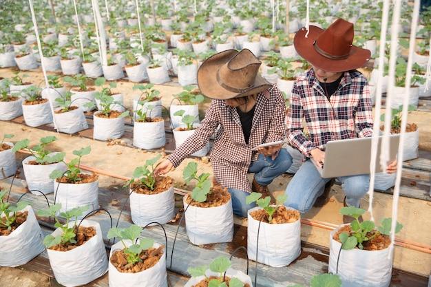 Granjero que controla el melón en el árbol. conceptos de vida sostenible, trabajo al aire libre, contacto con la naturaleza, alimentación saludable. Foto gratis