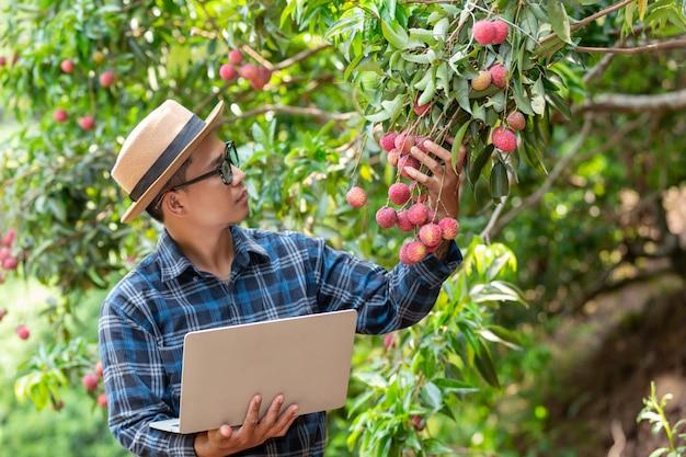 El granjero sostiene la lengüeta de la uña para revisar el lichi en el jardín. Foto gratis
