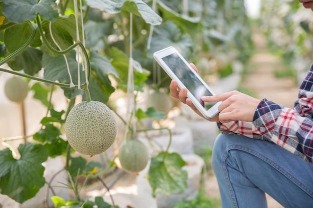 Granjero con la tableta para trabajar el huerto hidropónico orgánico en el invernadero. agricultura inteligente, granja, concepto de tecnología de sensores. mano del granjero usando la tableta para controlar la temperatura. Foto gratis