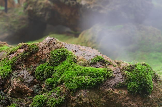 Greenmoss creciendo en roca con niebla Foto Premium