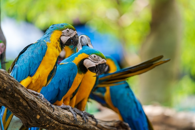 Grupo de colorido guacamayo en ramas de los árboles Foto Premium