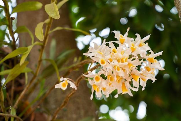 Grupo de orquideas amarillentas Foto Premium