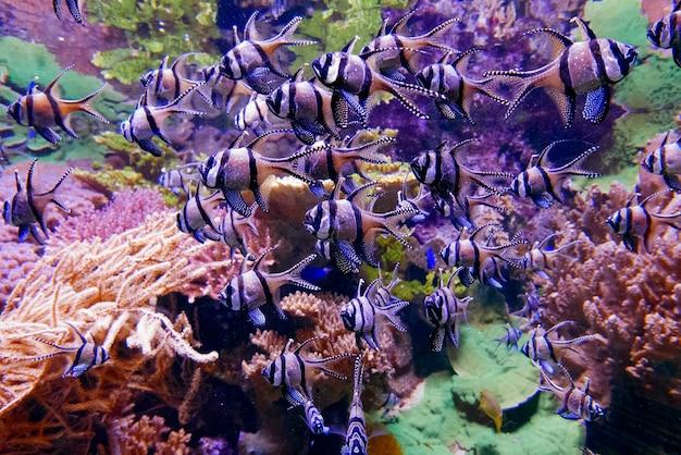 Grupo de peces bajo el agua. Foto gratis