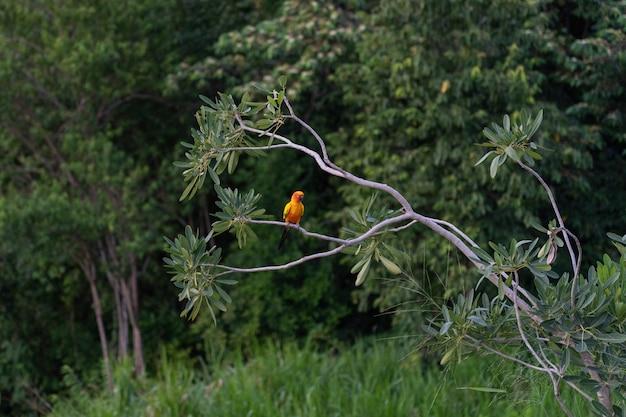Guacamayo africano en árbol Foto Premium