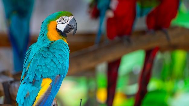 Guacamayo azul y amarillo Foto Premium