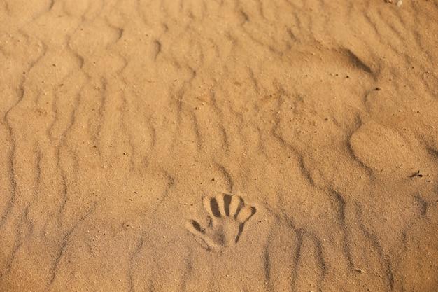 Handprint en la arena. cerca de una huella en la arena, mar en la playa. Foto Premium