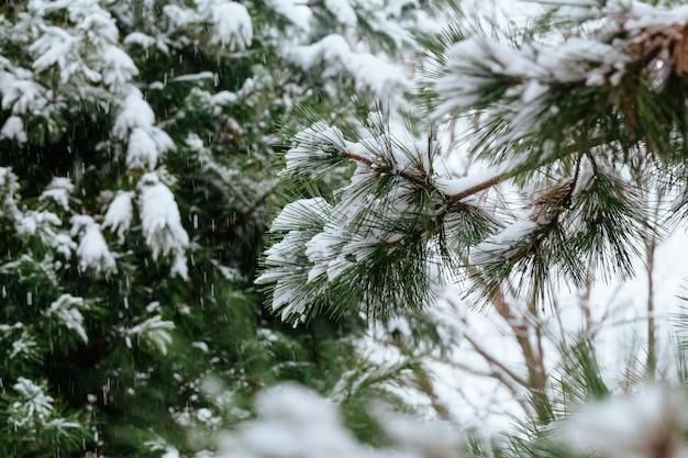 Heladas de invierno. marea de invierno, pequeños cristales de hielo blanco en invierno formados en el suelo u otras superficies cuando la temperatura cae por debajo de cero. Foto Premium