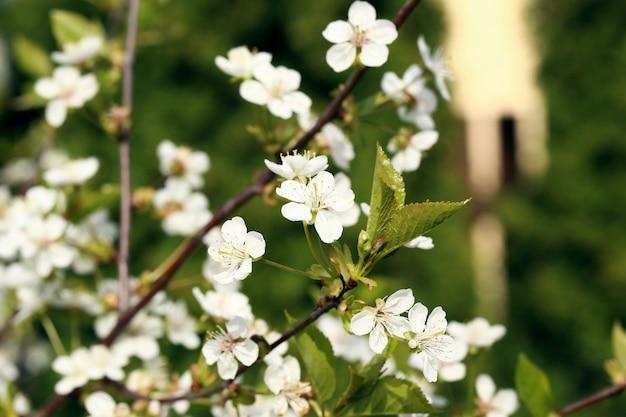 Hermosa flor floreciente Foto gratis