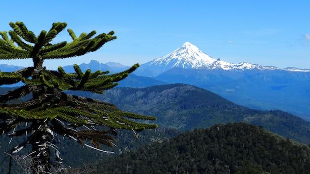 Hermosa foto de un árbol con montañas en la distancia bajo un cielo azul claro Foto gratis