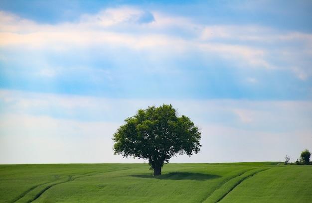 Hermosa foto de un árbol solitario de pie en medio de un campo bajo el cielo despejado Foto gratis